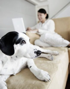 dog on couch with owner