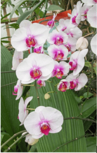 ClimateMaster Helps Farmer Grow Orchids in Cold Maine Winters