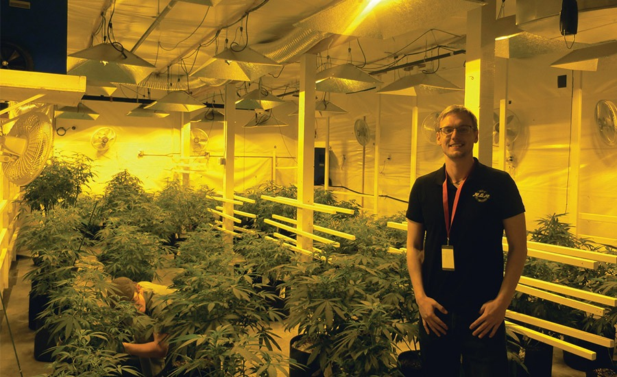 Hvac S Growing Role In The Marijuana Industry Cold Craft