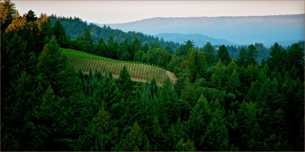 Lexington Wine Company Vineyards
