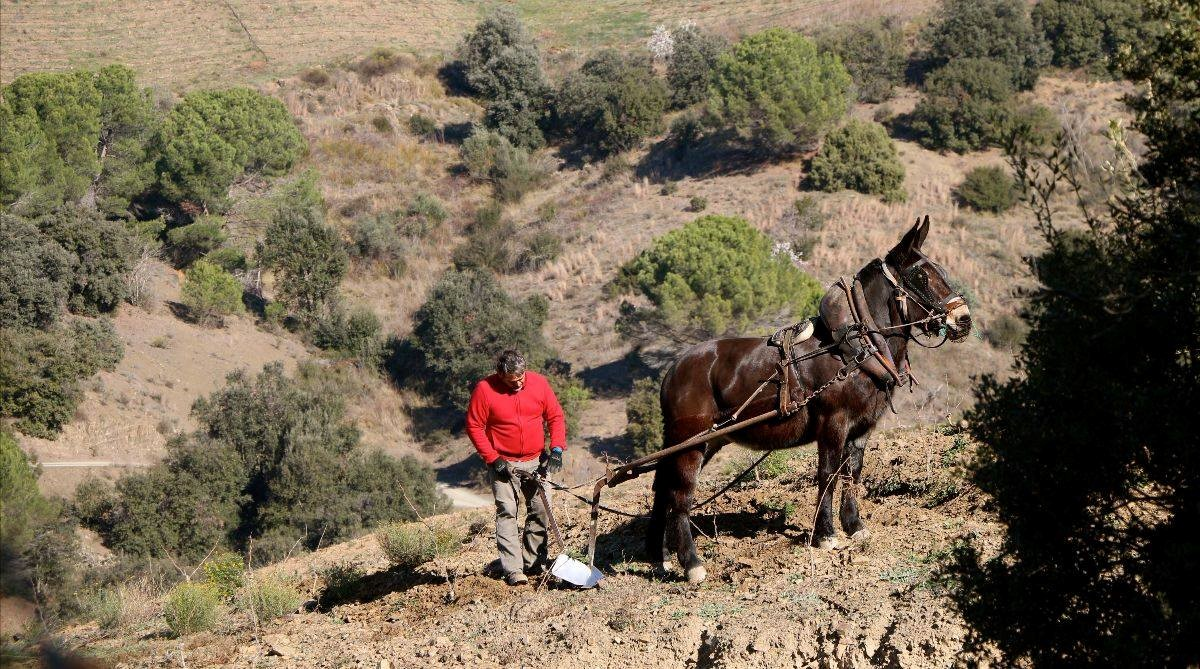 Plowing vineyards in Priorat